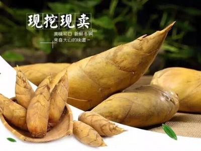 来自大山的味道:安吉冬笋