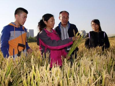 郑桂萍:寒地水稻拓荒人
