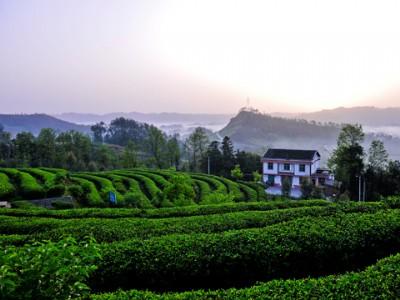 重庆市:发展绿色食品,助力乡村振兴