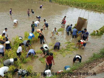 王家贡米:稻鱼共生,粮渔双赢