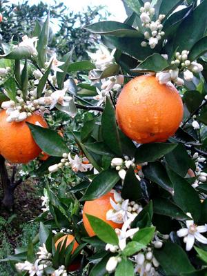 履行协会职责,推进秭归脐橙产业发展