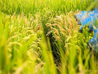 天津市:加快农业生态转型,走乡村绿色发展之路