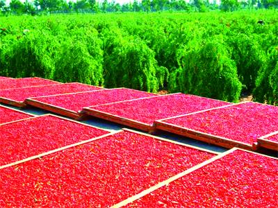 宁夏绿色农业发展报告(2018)
