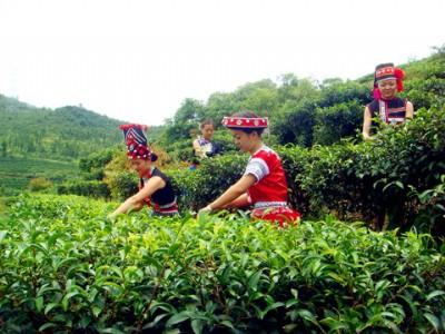 打高原牌,走特色路,持续推动云南绿色农业持续健康发展