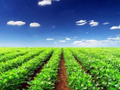 中国绿色农业十五年