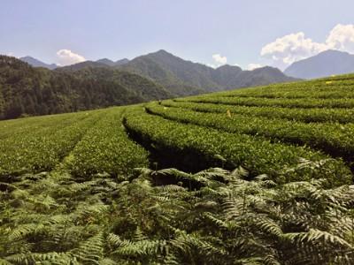 新理论•新农业•新农村——绿色农业发展理论的形成与展望