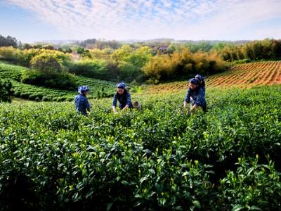绿色农业的产生背景和未来的发展趋势