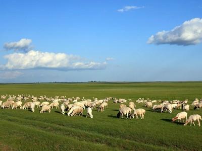 内蒙古自治区绿色农业发展报告(2018)