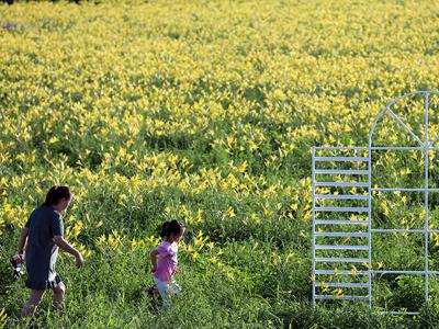 山西省:提质量,塑品牌,开启全面发展绿色食品新征程