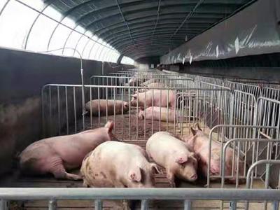 天津市武清区:推广种养一体模式,整区推进畜禽废弃物资源化利用