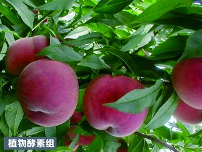 黑龙江省田之源农业科技开发有限公司