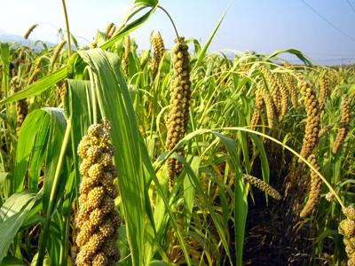 河北省:质量兴农,绿色先行,努力实现绿色食品发展新跨越