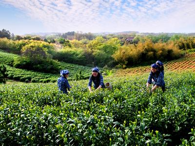 江苏省:绿色引领,书写农业高质量发展新篇章