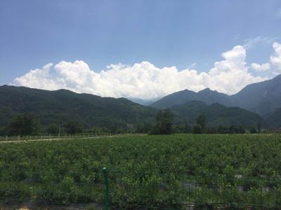 陕西省:抓机遇,重特色,开创绿色农业发展新局面