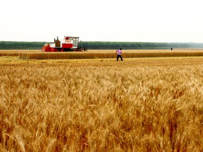 天津市:发展绿色农业,提升农产品质量安全水平