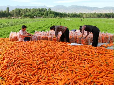 """甘肃省:创新思路,强化服务,""""绿色兴农""""引领品牌农业发展"""