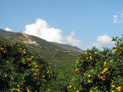 中国驰名商标——城固柑桔